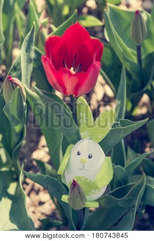 Cute bunny toy hidding among red tulips. Easter time concept.