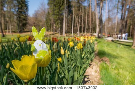 Cute bunny toy hidding among yellow tulips. Easter time concept.