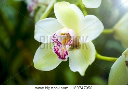 Orchid flower and green leaves background with sunlight in garden. Orchids is considered the queen of flowers
