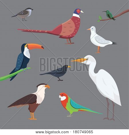 Popular birding species flat collection isolated set