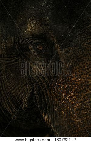 Eye of the Indian elephant in Cabodjia;