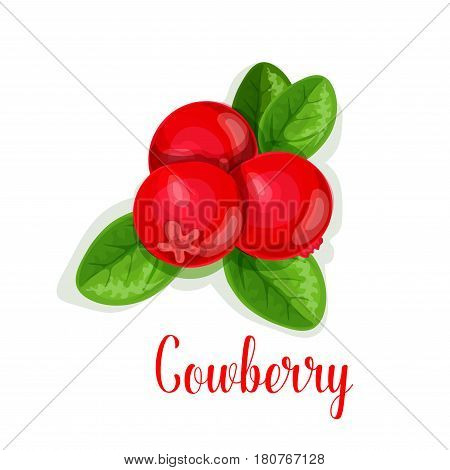Cowberry icon. Vector isolated lingonberry or berry species. Bunch of fresh sweet partridgeberry fruits on branch for jam dessert or fresh juice label or grocery store and farm market