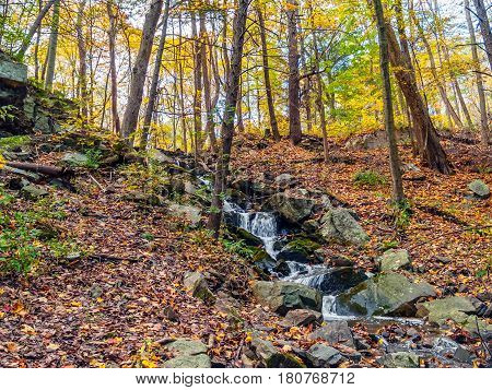 A small brook trickles down this hill during Autumn in the Pocono Mountains of Pennsylvania.