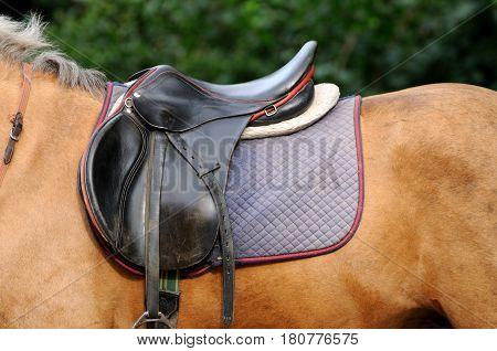 Saddle and stirrup horse close up .