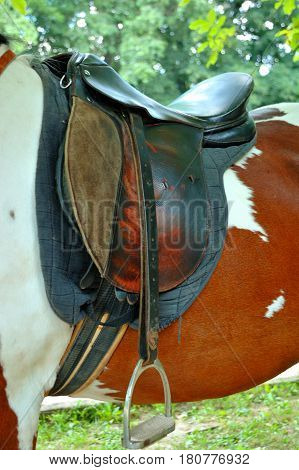 A saddle on the horse close up .