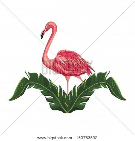 tropical leaves and pink flamingo bird icon over white background. colorful design. vector illustraiton