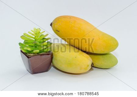 Close up of mango fruits with green plant.Research has shown antioxidant compounds in mango fruit have been found to protect against colon,breast,leukemia & prostate cancers.
