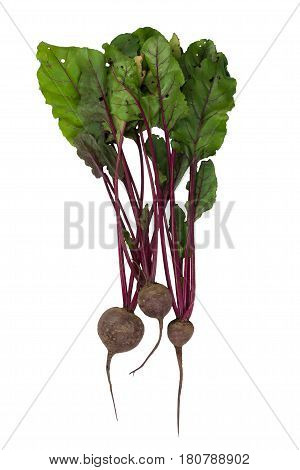 beets with green tops on white, on a white background