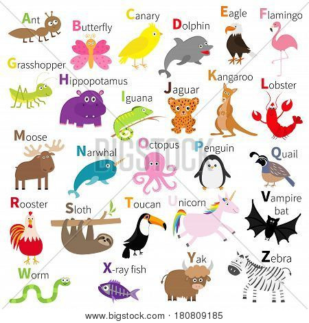 Zoo animal alphabet. Cute cartoon character set. White background. Baby children education. Butterfly dolphin flamingo jaguar lobster penguin sloth kangaroo bat eagle unicorn. Flat design Vector