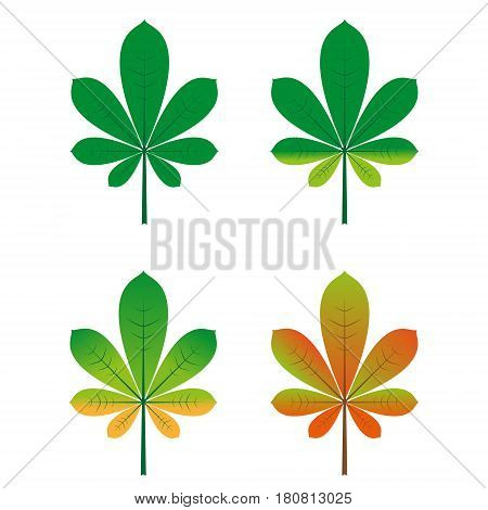 Set of four leaves of chestnut. The leaves are colored depending on the time of year. Summer and autumn