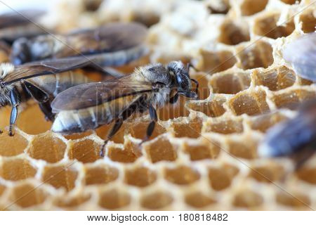 The newborn bee is walking on the nest.