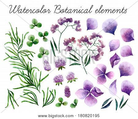 Big set of watercolor botanical elements. Beautiful botanical elements isolated on white background. Hand drawn herbs and flowers for your design.