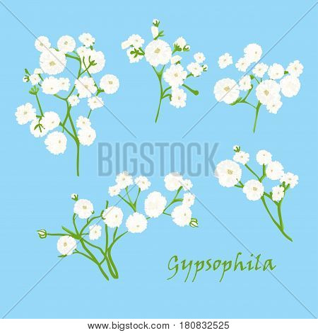 Set of branch beautiful hand-drawn white gypsophila, on blue background. Vector illustration