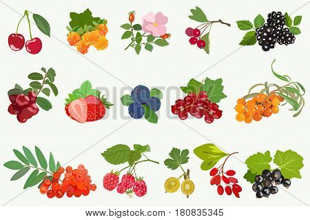 Collection of juicy, edible house and forest berries with leaves. Cherry and wild rose, cloudberry and blackberries, red and black currants, sea buckthorn and mountain ash, gooseberries and blueberries with barberry.