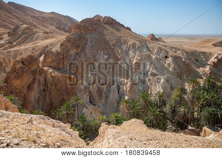 Deep mountain gorge with palm trees in the desert. Photo without effects
