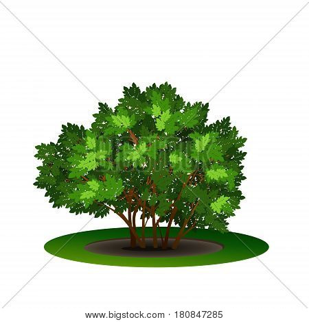 bush with green leaves and shadow on white background