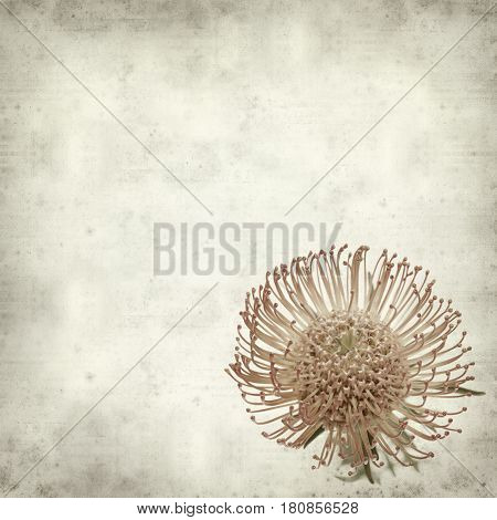 textured old paper background with red pincushion protea flower