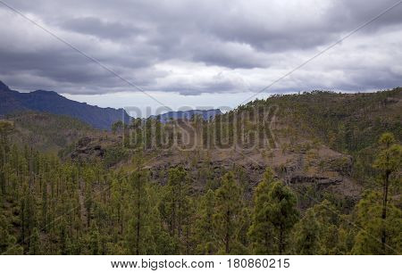 Central Gran Canaria edge of protected area of Integral Nature Reserve Inagua pine forest