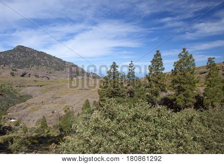 Central Gran Canaria protected area of Integral Nature Reserve Inagua Canarian Pine trees
