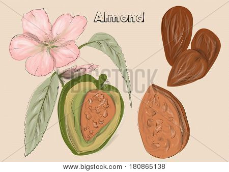 almonds. nuts and flowers on biege background