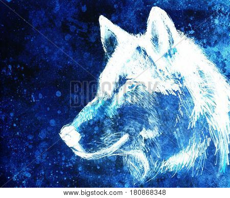 Drawing wolf on old paper, original hand draw. Color effect
