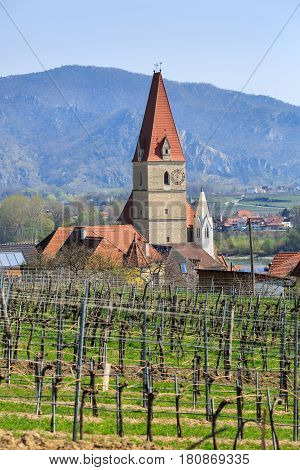 Church of the Assumption of the Virgin Mary on a hilltop (german: Wehrkirche Maria Himmelfahrt) in fair municipality of Weissenkirchen in der Wachau with vineyards in the foreground. The District of Krems-Land, Lower Austria.