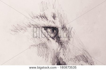 lion eye. animal drawing on vintage paper
