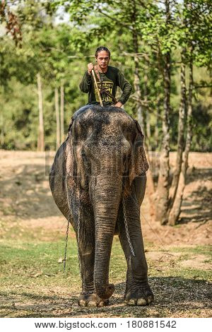 Wang Dong Thailand March 6 2016: Mahout riding on his elephant in sanktuary of elephants Elephants World.