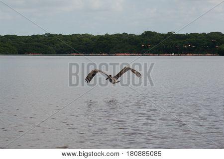 Lake in National Reserve of Celestun in Yukatan, Mexico