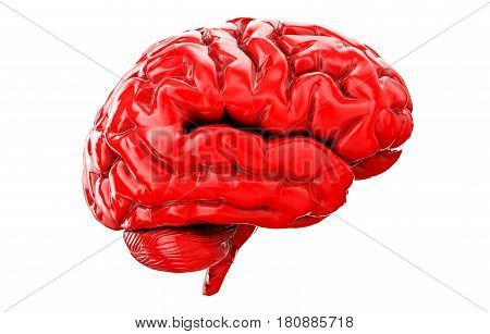 3d Illustration of human brain front view isolated on white