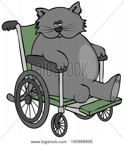 Illustration of a three legged cat sitting in a wheelchair.