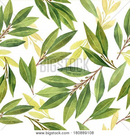 Watercolor Bay leaf seamless pattern of flowers and leaves isolated on white background.