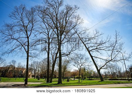 Leaning Tree in Park