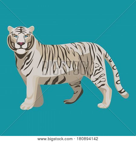 White or bleached tiger isolated. Predator rare animal with black stripes typical of Bengal tiger, but carries a white or near-white coat. Endangered wildlife mammal vector illustration