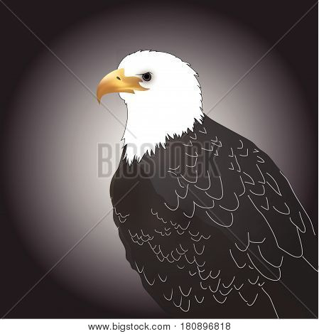 predator eagle white head and black background