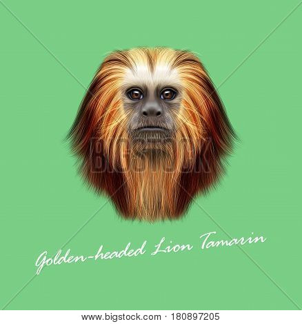 Vector Illustrated portrait of Golden-headed lion tamarin monkey. Cute fluffy face of primate on green background.
