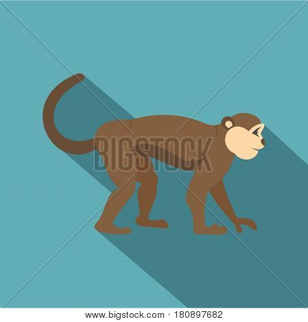 Macaque monkey icon. Flat illustration of macaque monkey vector icon for web