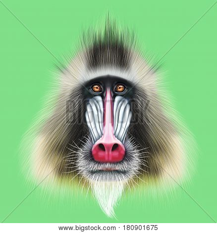 Illustrated portrait of Mandrill monkey. Cute fluffy face of primate on green background.