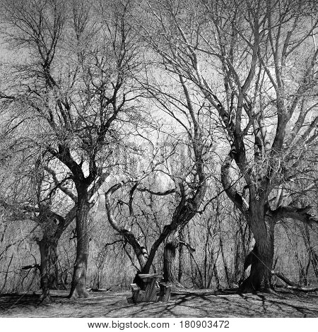 Leafless trees and a picnic table in the winter. Black and White abstract