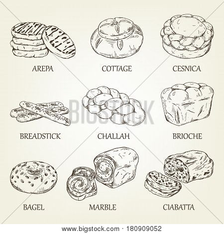 Hand-drawing collection of bakery products. Vector illustration with realistic bread icons. Graphic kinds of pastry designed for advertising bakery, restaurant menu, logo or recipe book design.