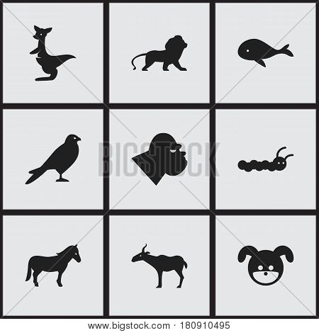 Set Of 9 Editable Zoology Icons. Includes Symbols Such As Puppy, Wildcat, Stallion And More. Can Be Used For Web, Mobile, UI And Infographic Design.