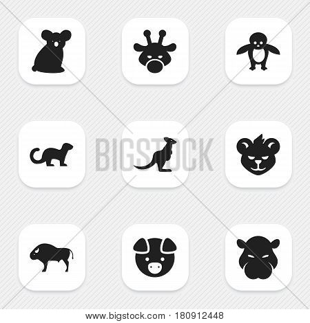 Set Of 9 Editable Zoology Icons. Includes Symbols Such As Penguin, Wallaby, Hog And More. Can Be Used For Web, Mobile, UI And Infographic Design.