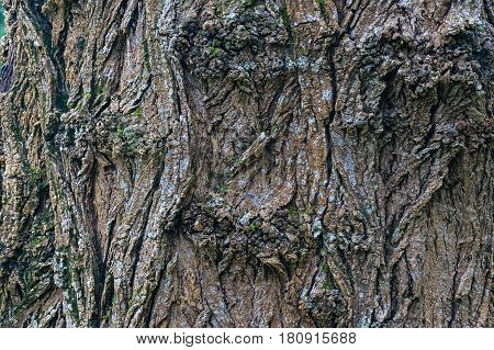 Coarse Rough Texture Of Tree Bark