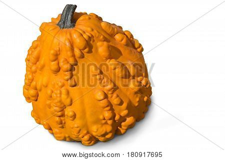 Big ripe yellow pumpkin with bulges on the surface. Presented on a white background.