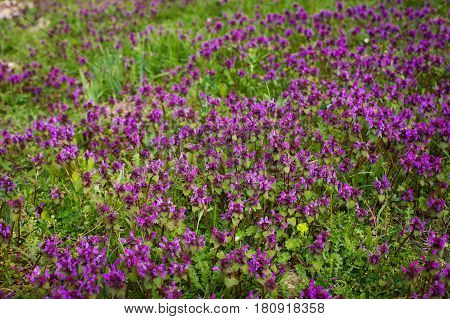 Nature Colorful Natural Blurred Background Of Out Of Focus Meadow. Bokeh, Boke Wild Flowers With Sunlight Colors Absract Background