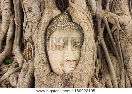 Buddha Head in Tree Roots in Wat Mahathat Ayuthaya Thailand.