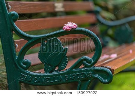 Bench With Pink Camellia Flower