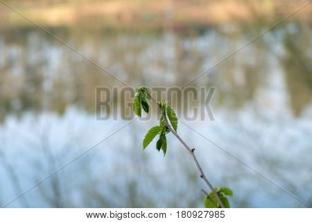 Quiet Spring Morning At Vltava River
