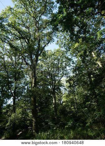 Upright view of trees in woods