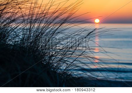 Silhouette tuft beach grass in front of blue sea sunset and orange sky horizon at Darss peninsula, Mecklenburg, Germany